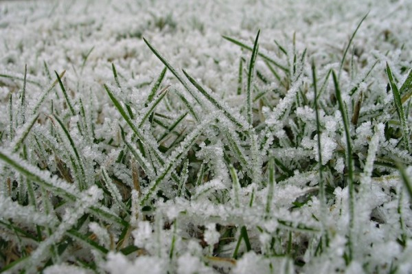 Lawn Care In Winter Tips On Caring For Winter Lawns